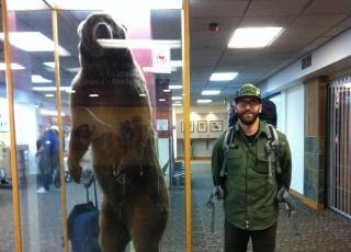 Grizzly bear, alaskan brown bear,